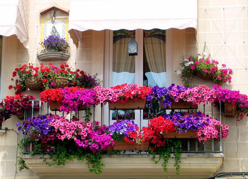 for Surfinia balcone
