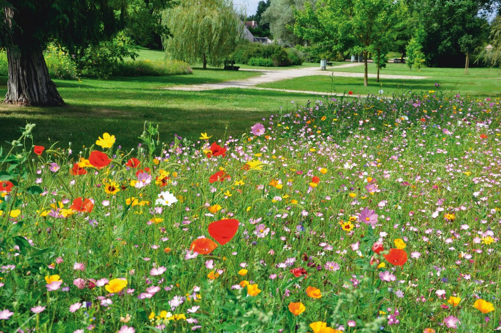 for Entretien jardin printemps